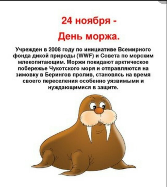 День моржа 18
