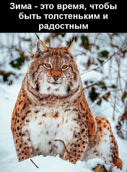 Смешные картинки скоро зима лучшие 01