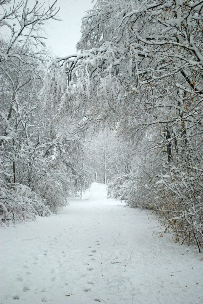 Зима и февраль лучшие обои на телефон   подборка (4)