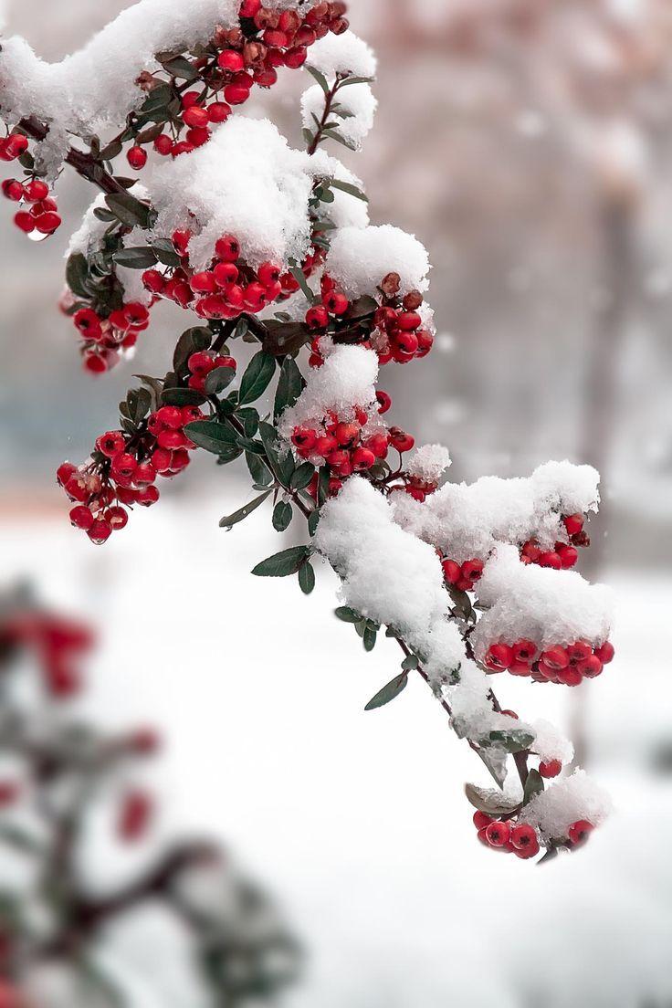 Зима и февраль лучшие обои на телефон   подборка (7)