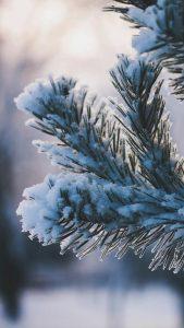 Вертикальные обои на айфон красивые зимние 9