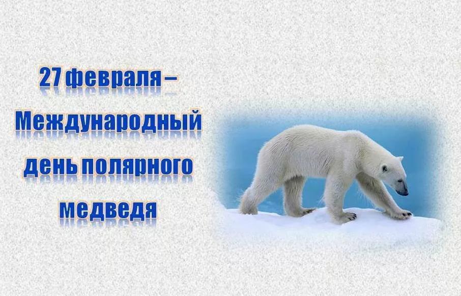 День белого медведя, красивые картинки поздравления 10