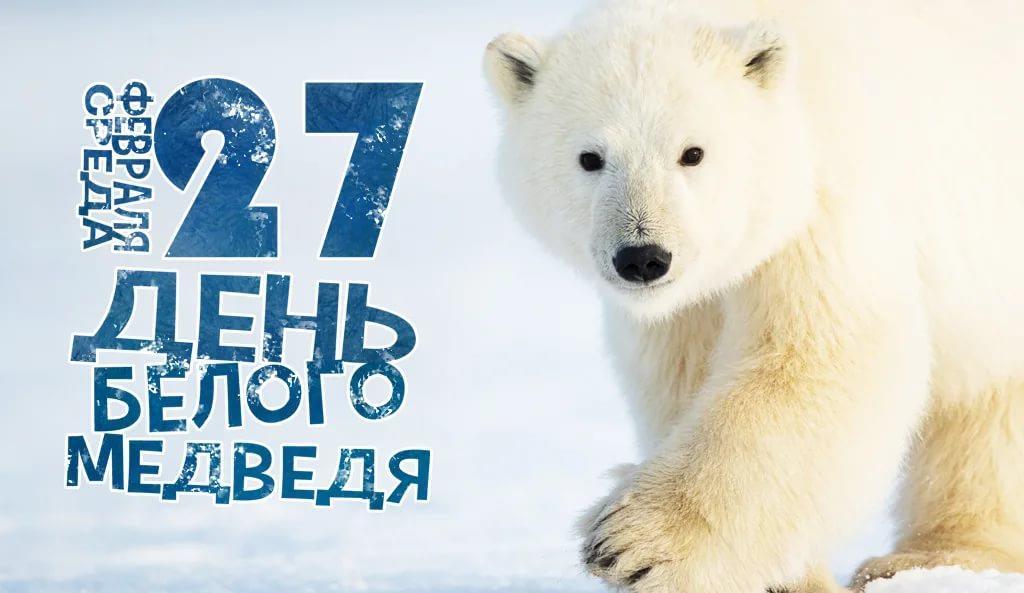 День белого медведя, красивые картинки поздравления 11