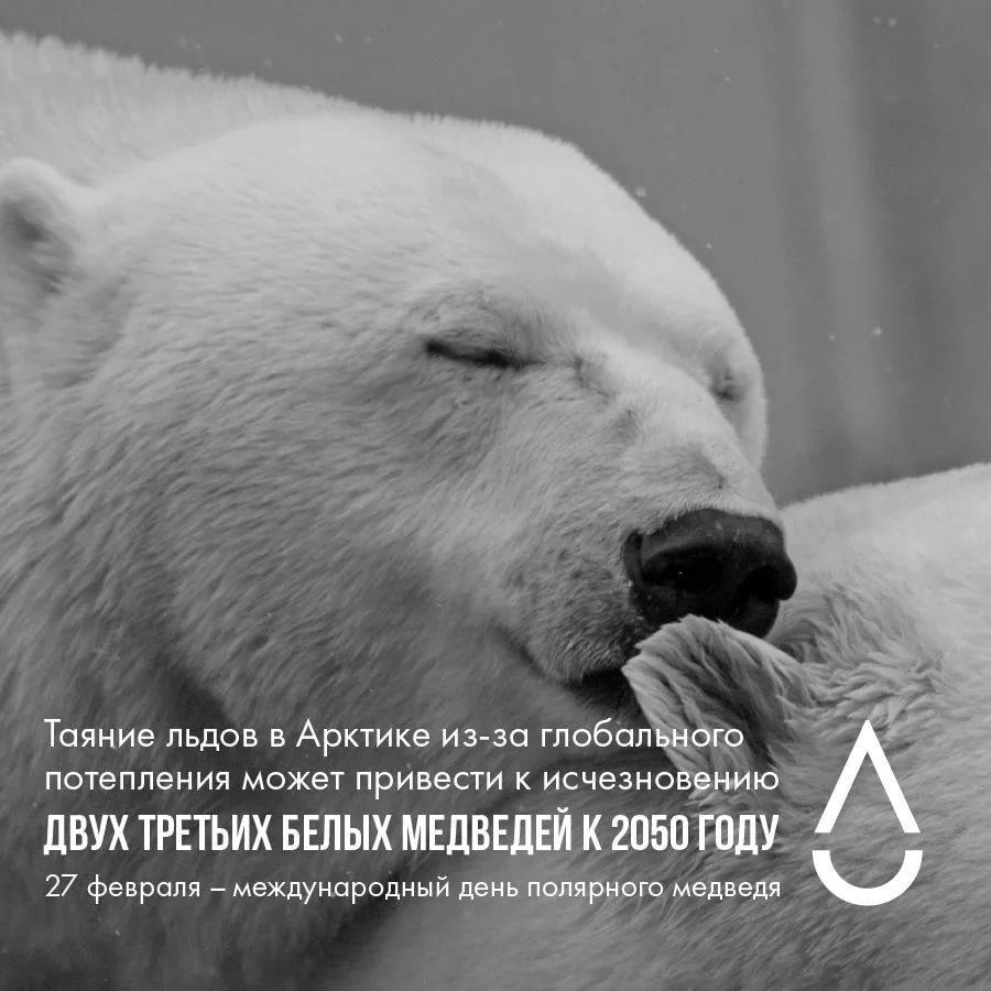 День белого медведя, красивые картинки поздравления 12