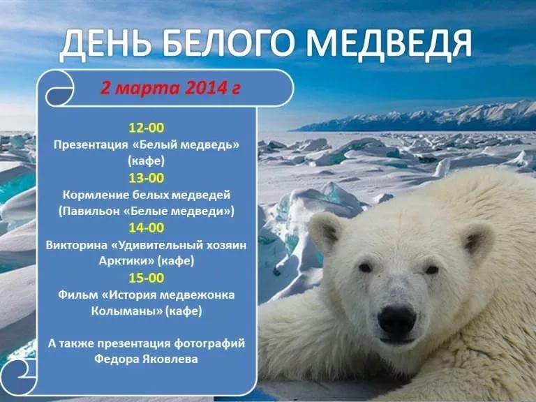 День белого медведя, красивые картинки поздравления 13