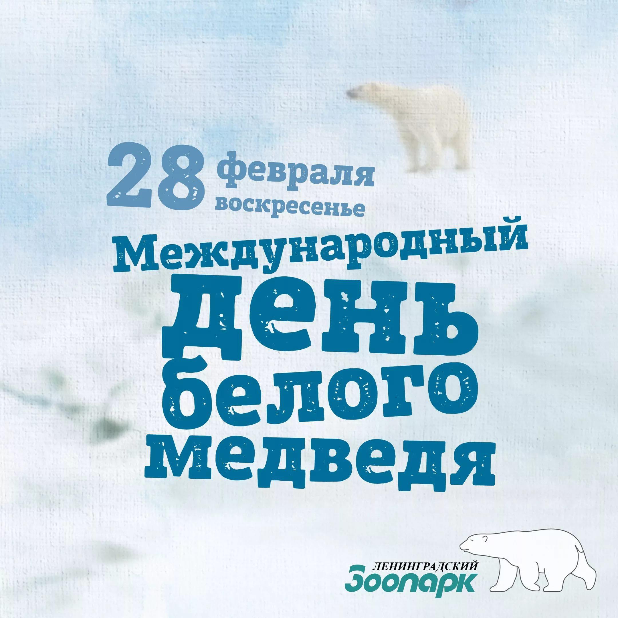 День белого медведя, красивые картинки поздравления 14