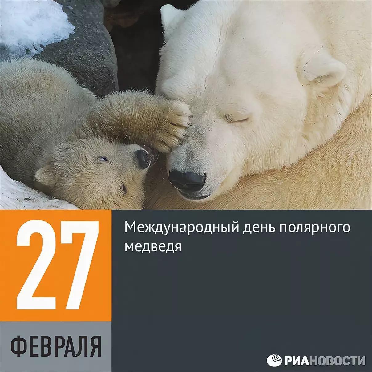 День белого медведя, красивые картинки поздравления 2