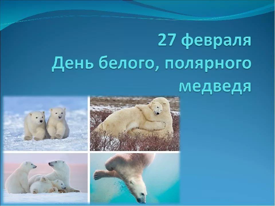 День белого медведя, красивые картинки поздравления 5