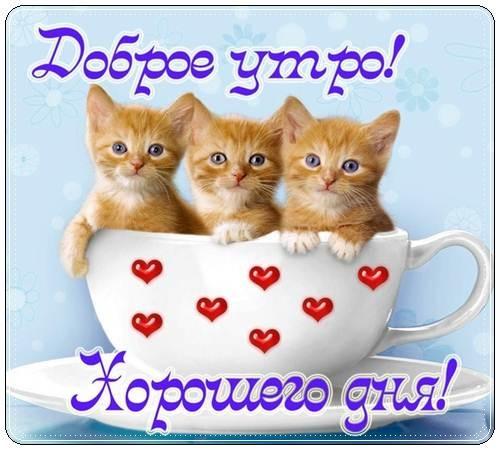 Милые пожелания доброго утра любимой девушке, своими словами (24 фото) 02