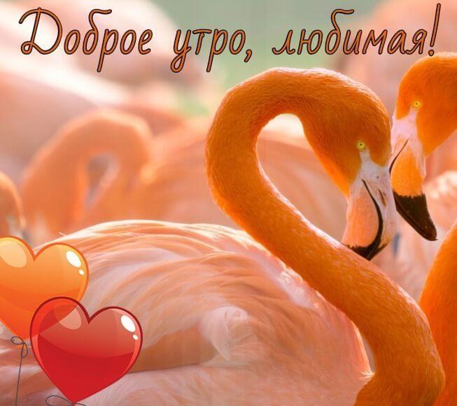 Нежные пожелание доброго зимнего утра любимой девушке (22 фото) 09