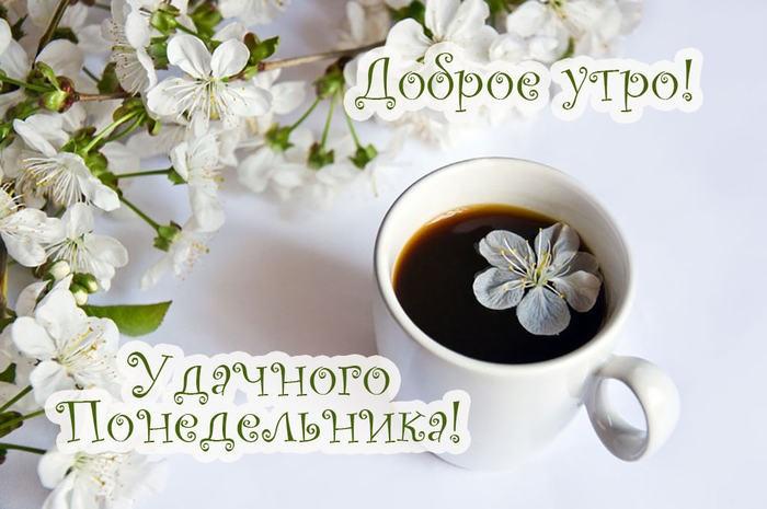 Светлое и доброе утро понедельника, красивые картинки (23 фото) 10