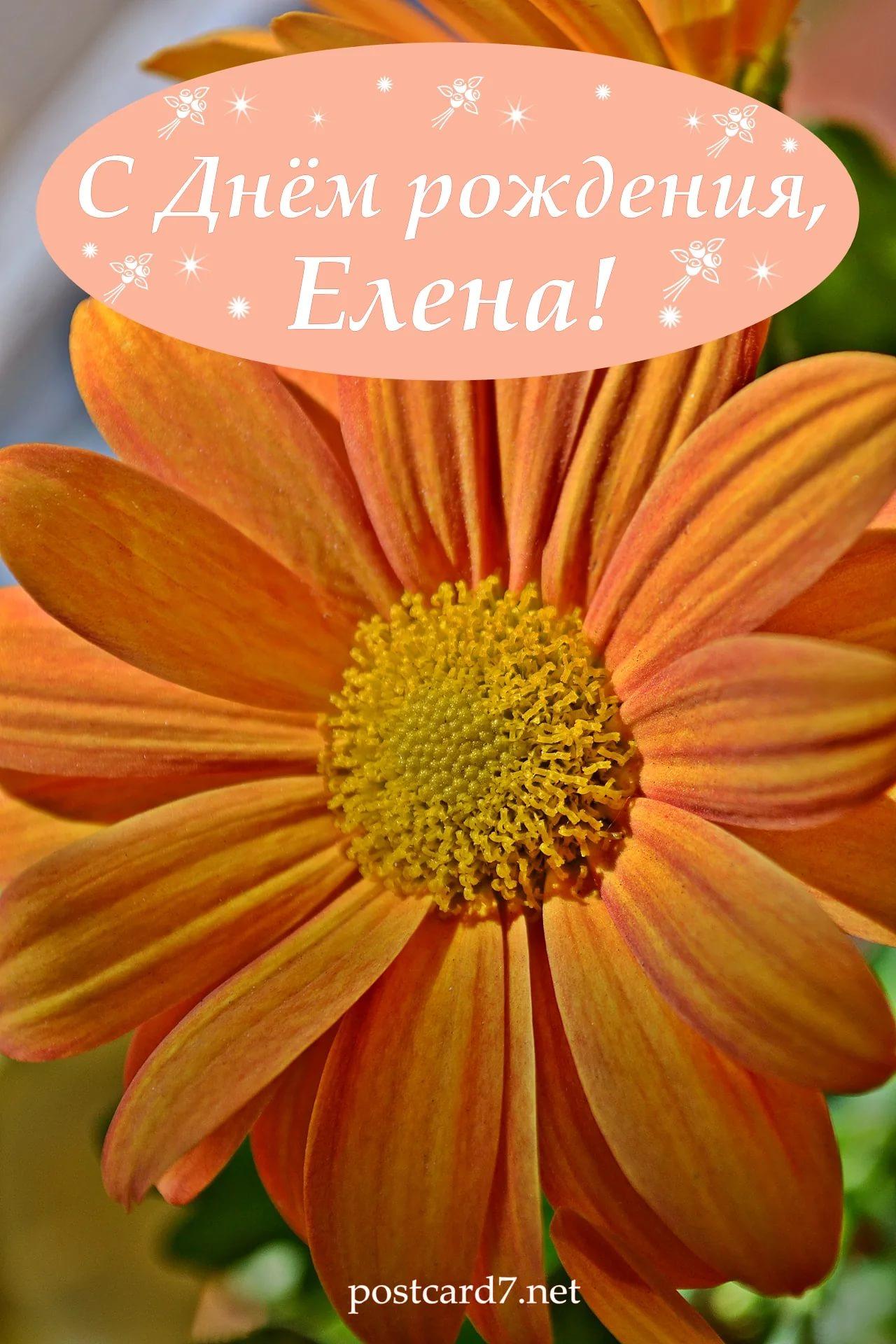 Яркие и бесплатные открытки с днем рождения Елена 1