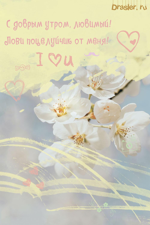 Красивые открытки с добрым утром любимому мужчине 7