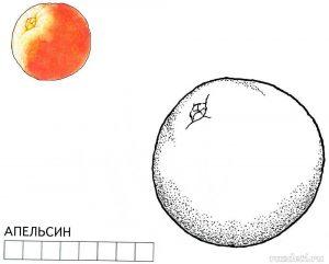 Апельсин рисунок раскраска для детей 25