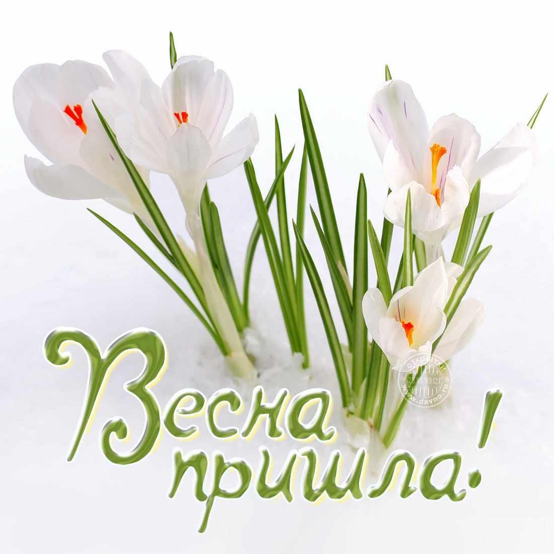 Весна пришла картинки 01