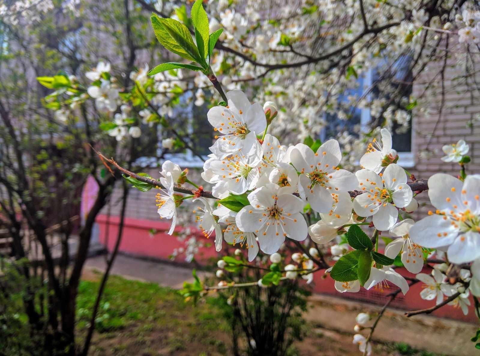 Весна пришла картинки 13