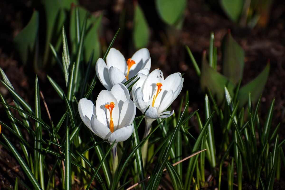 Весна пришла картинки 17