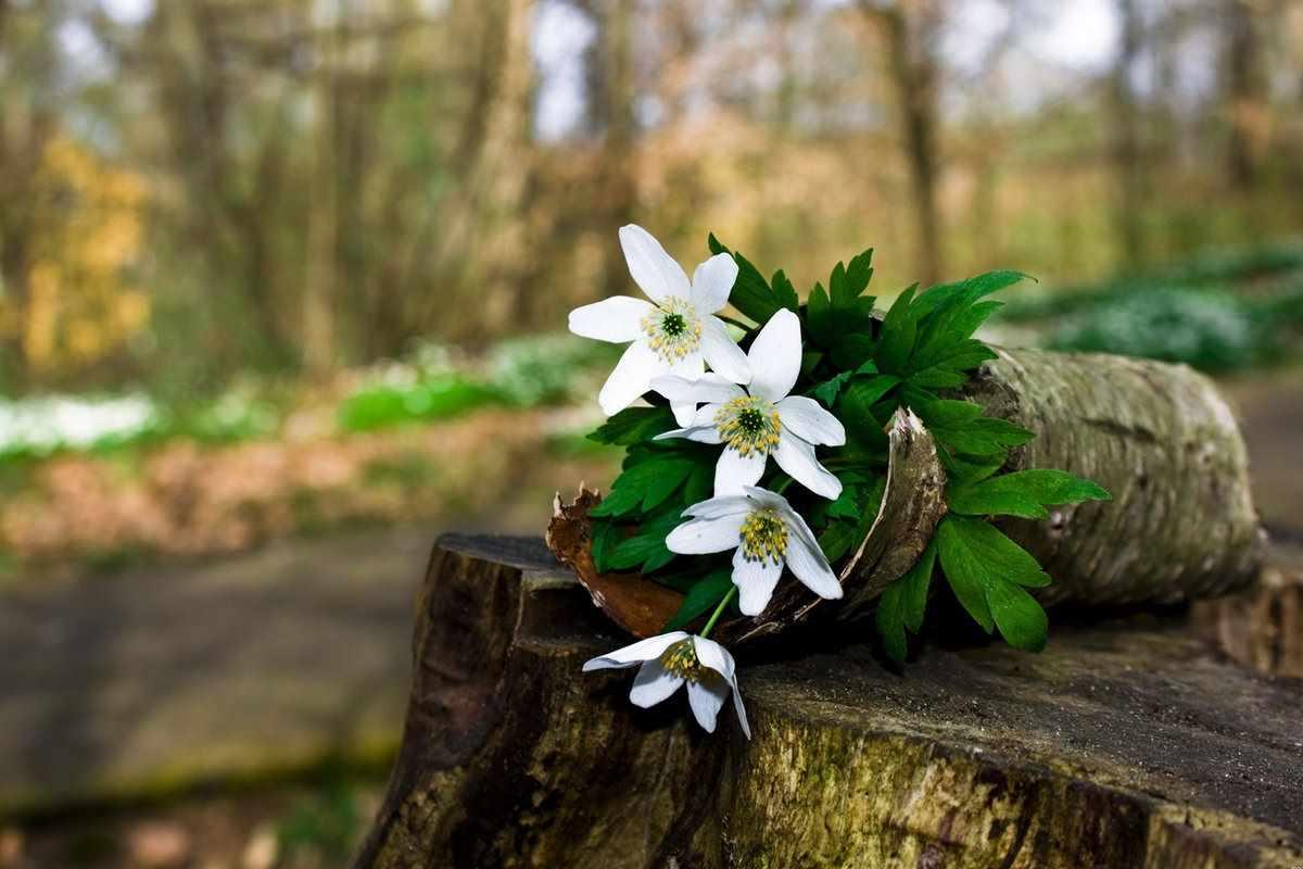 Весна пришла картинки 18