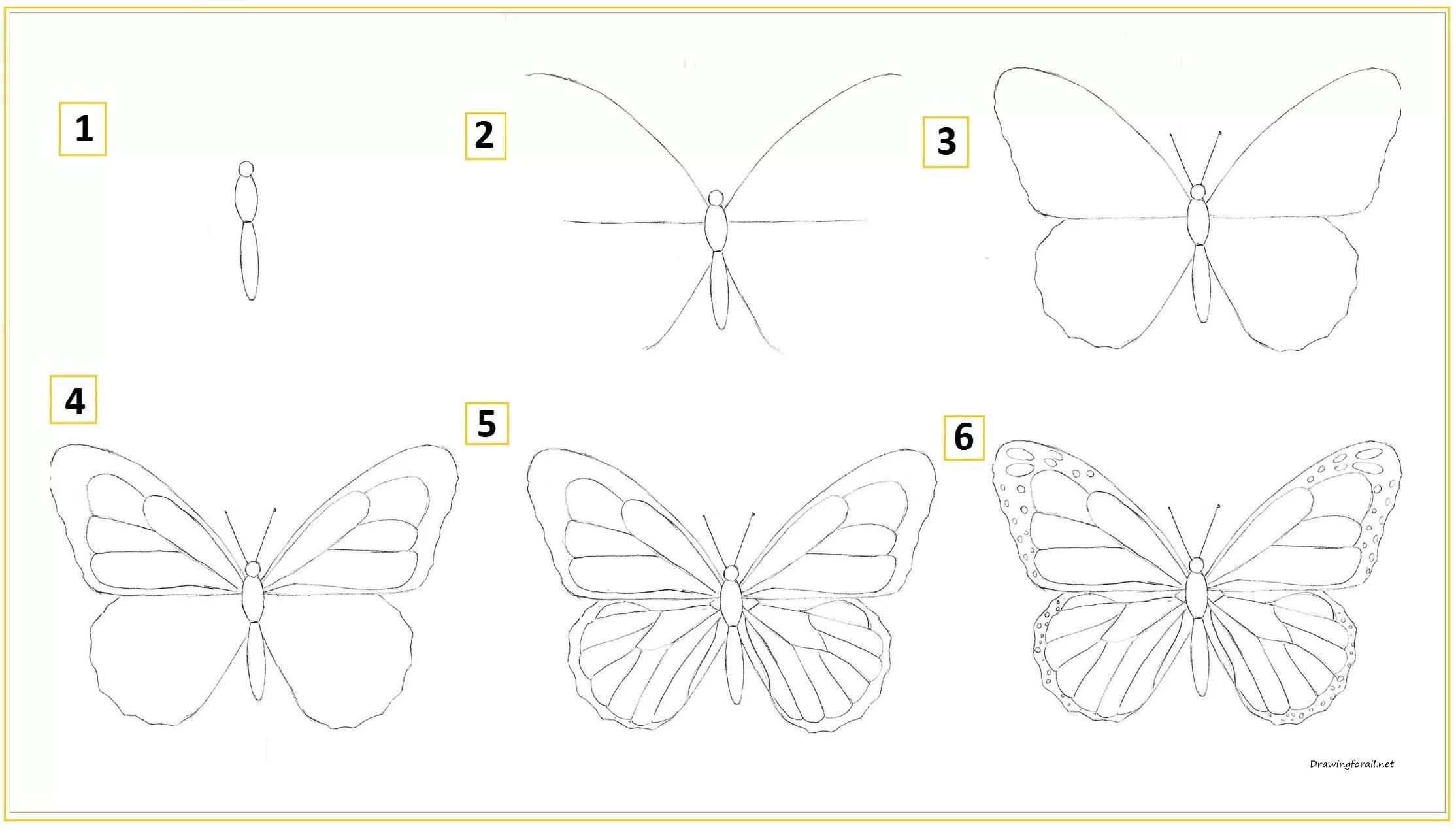 Карандашом бабочка рисунок для детей   подборка 1