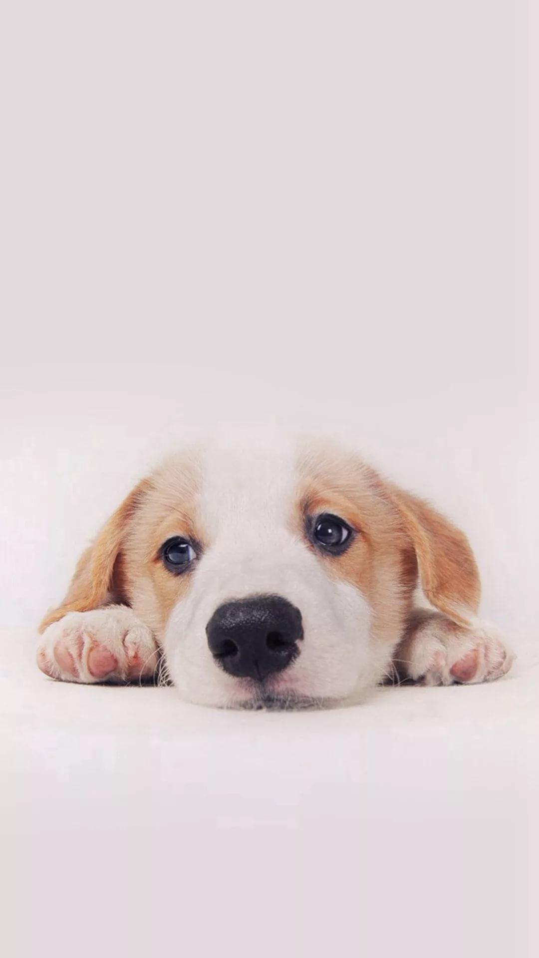 Красивые и милые обои на телефон с собакой 1