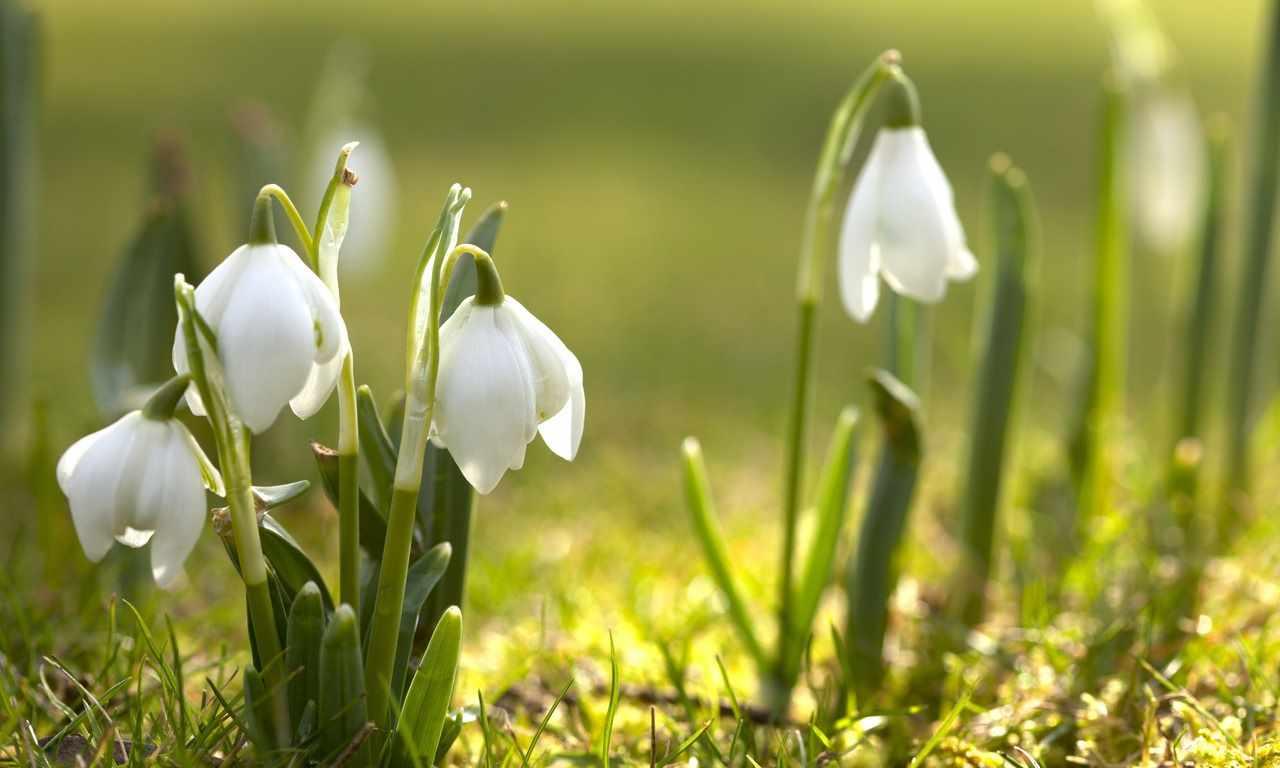 Красивые картинки для детей весна пришла 16