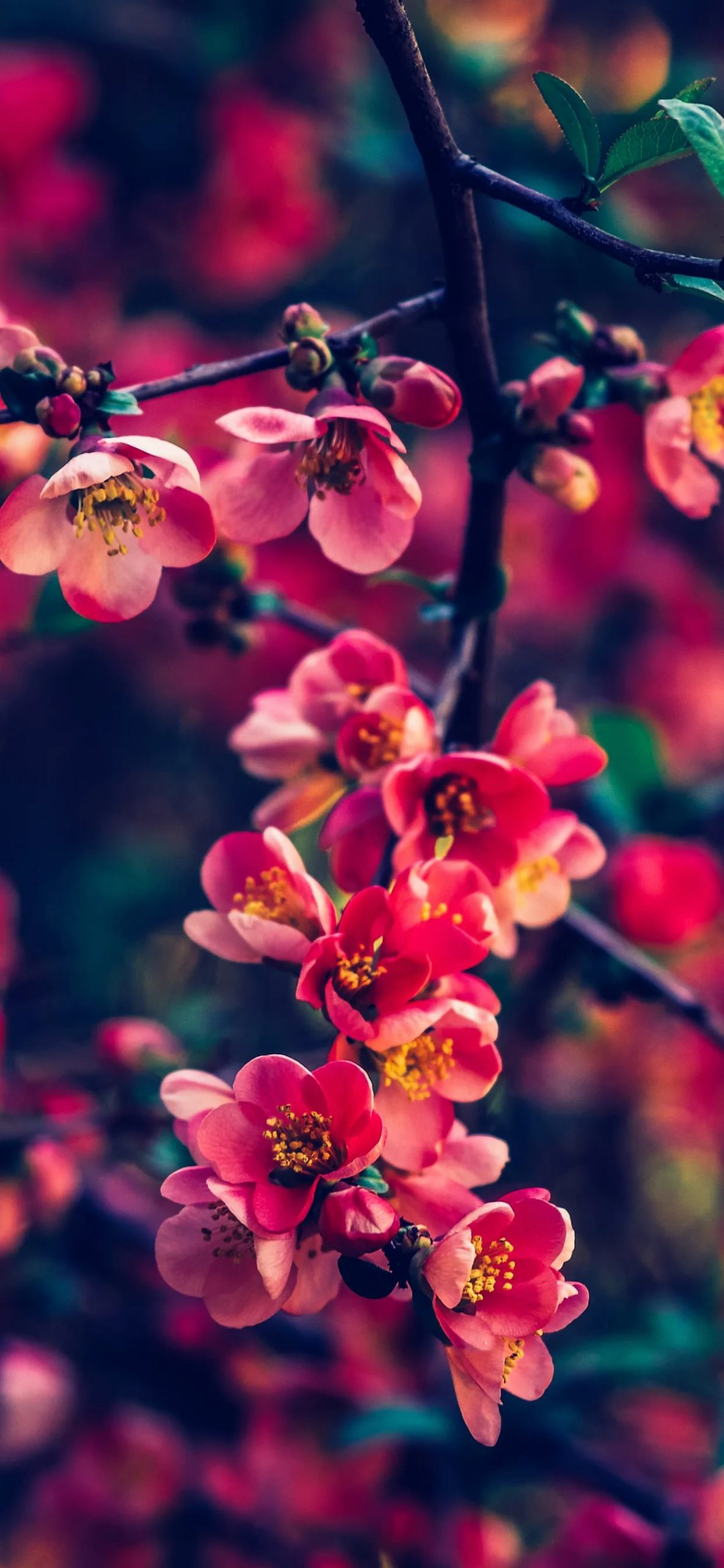 Красивые hd обои весна на телефон 1