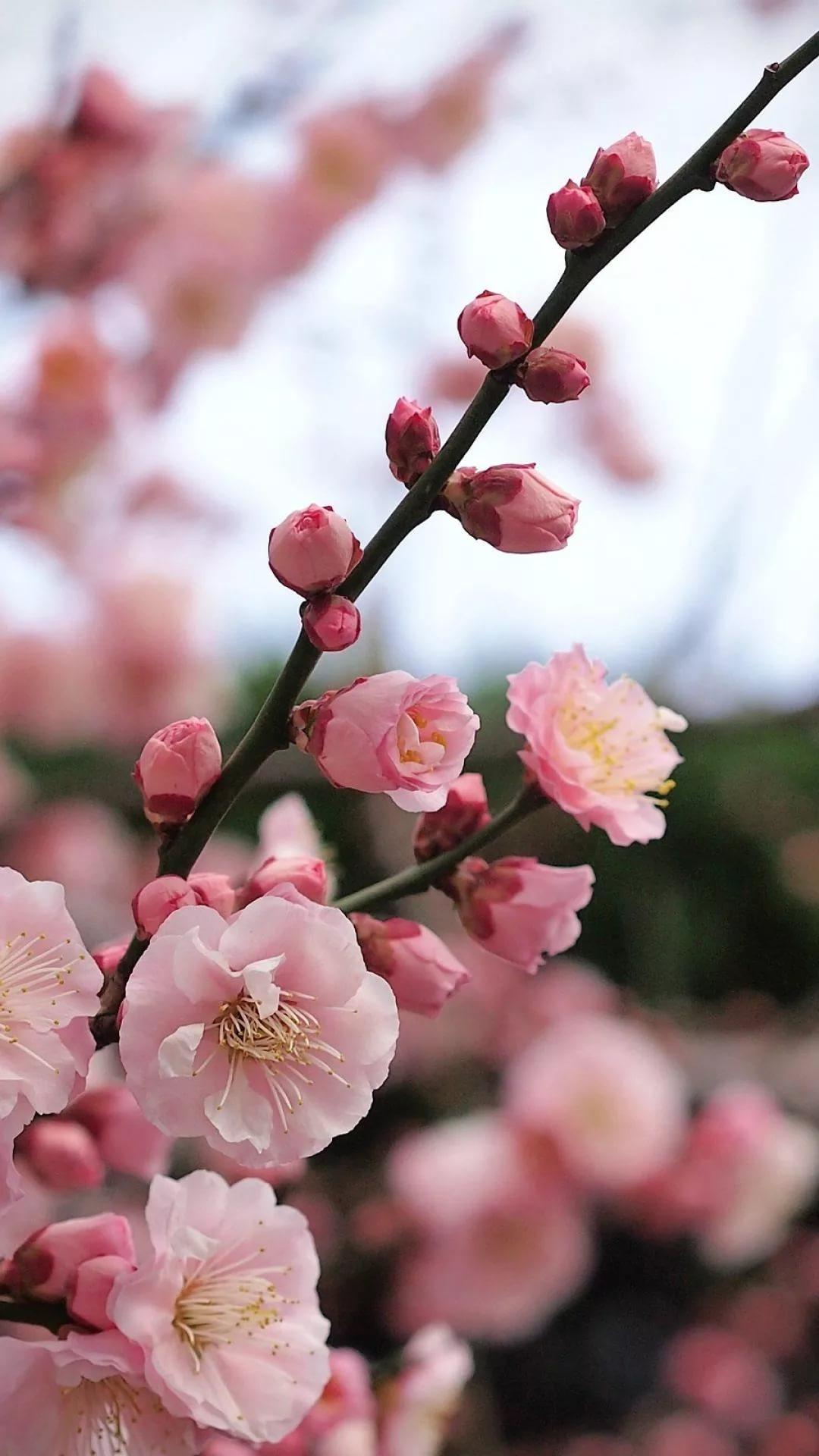 Красивые hd обои весна на телефон 10