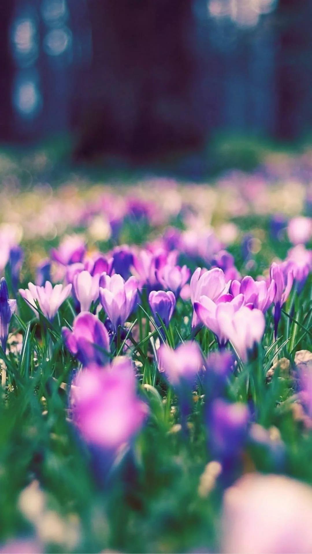 Красивые hd обои весна на телефон 11