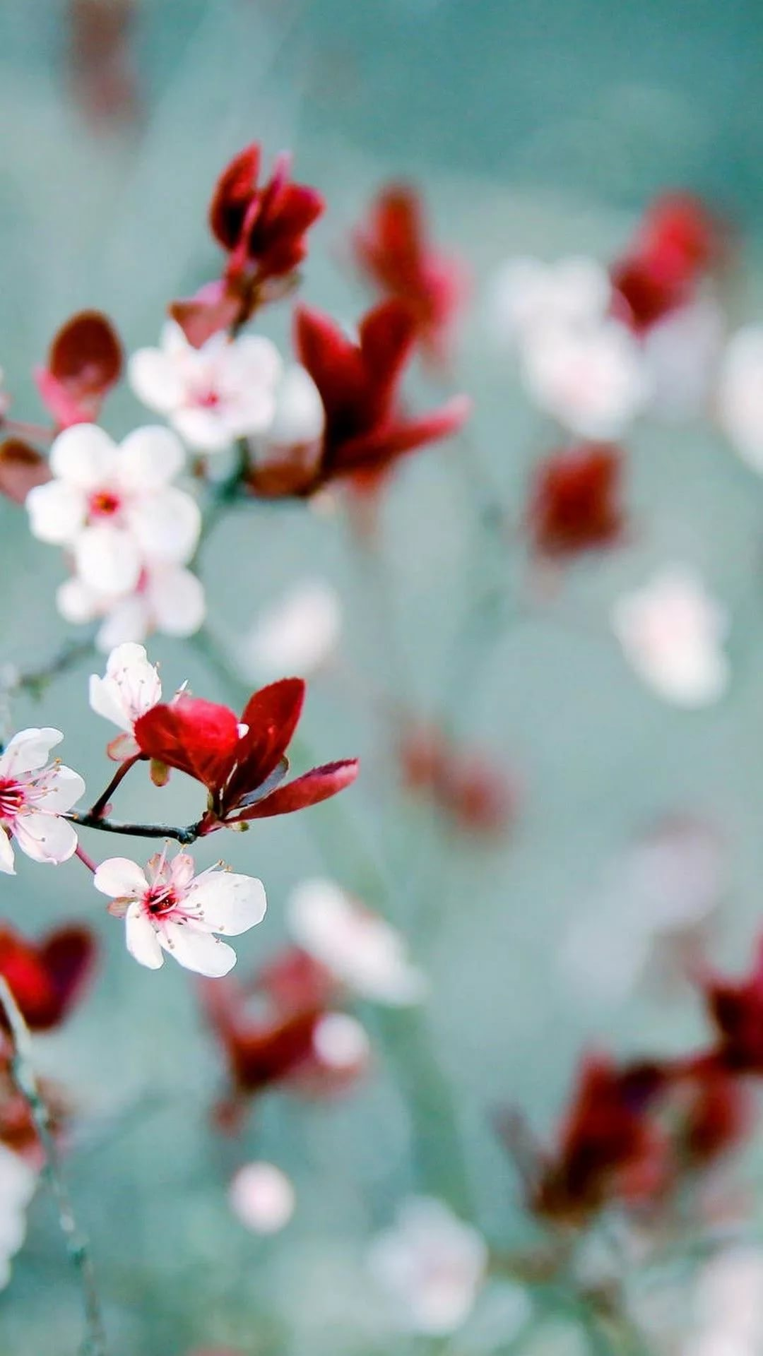 Красивые hd обои весна на телефон 13