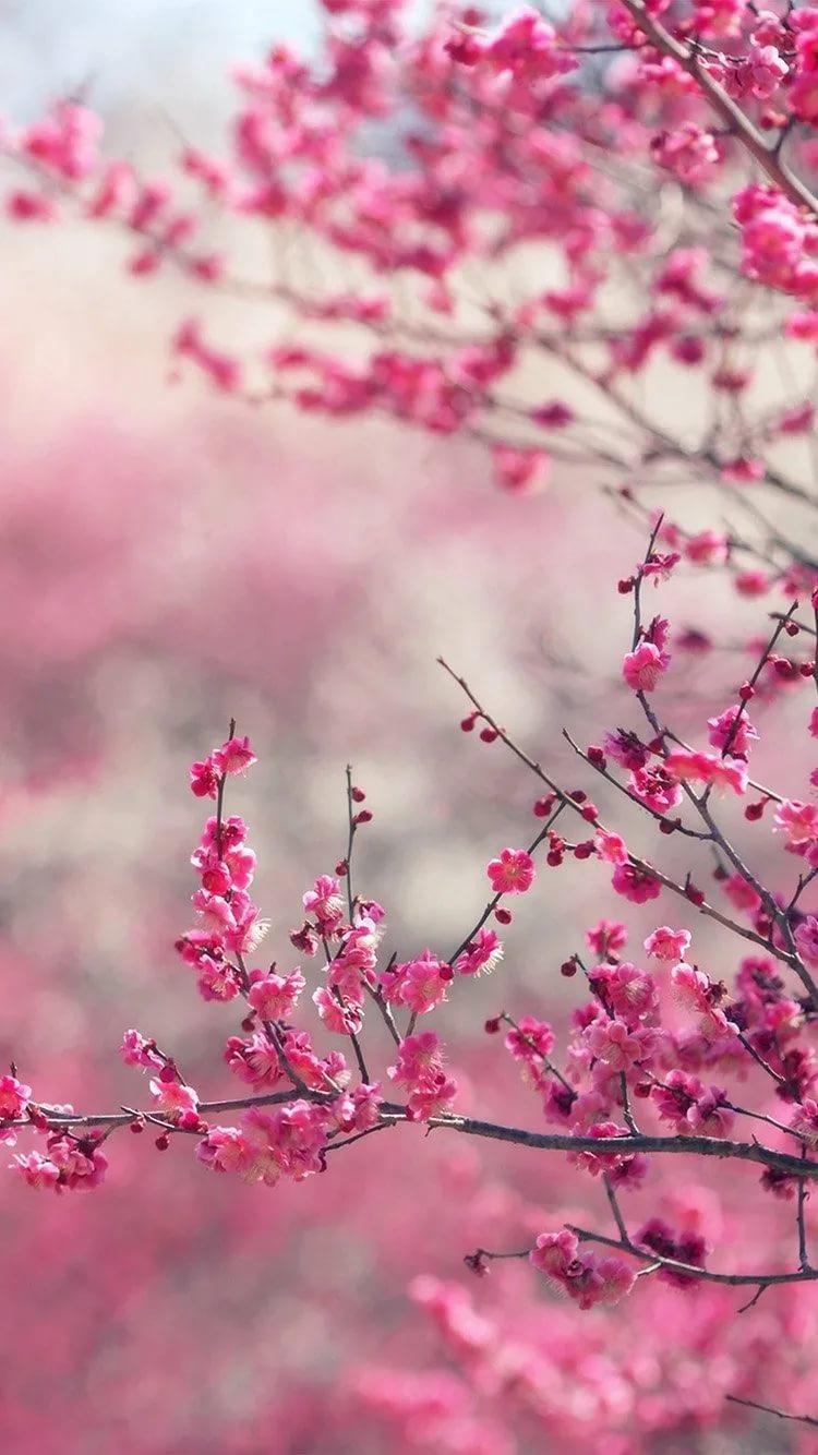 Красивые hd обои весна на телефон 14