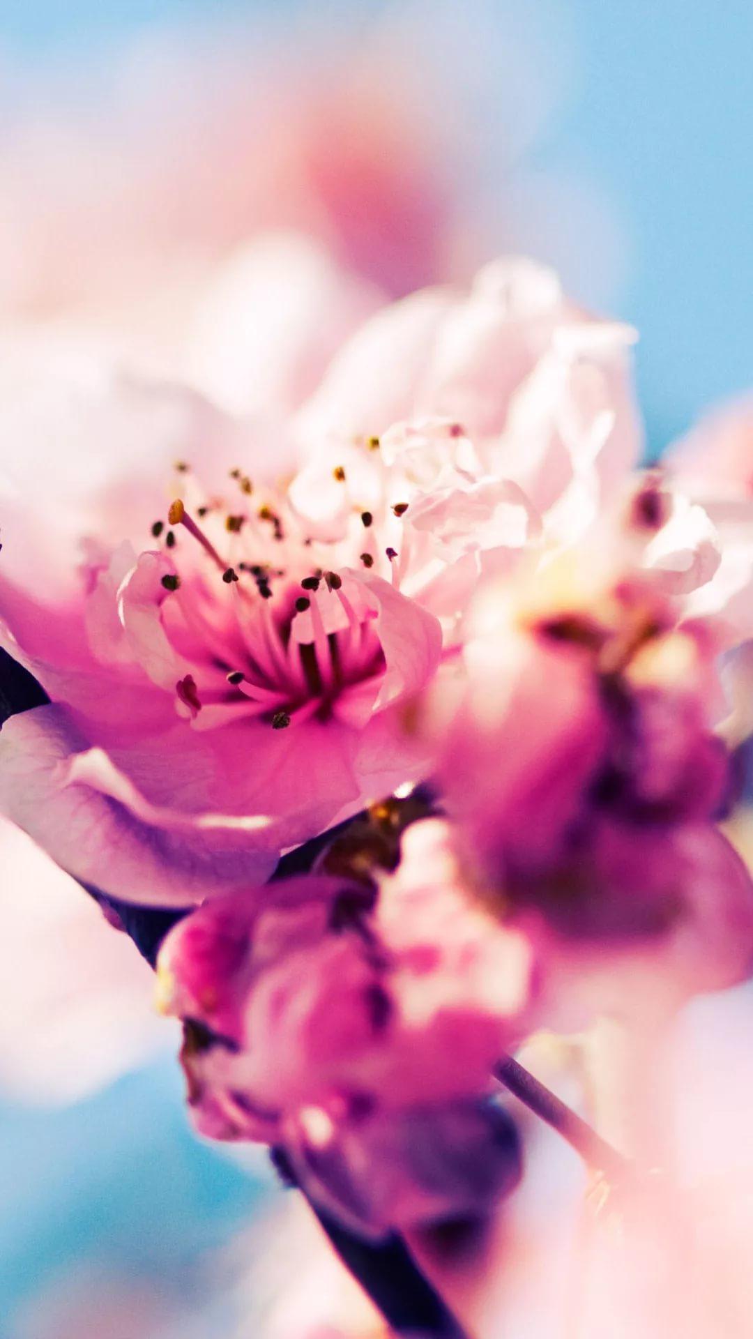 Красивые hd обои весна на телефон 15