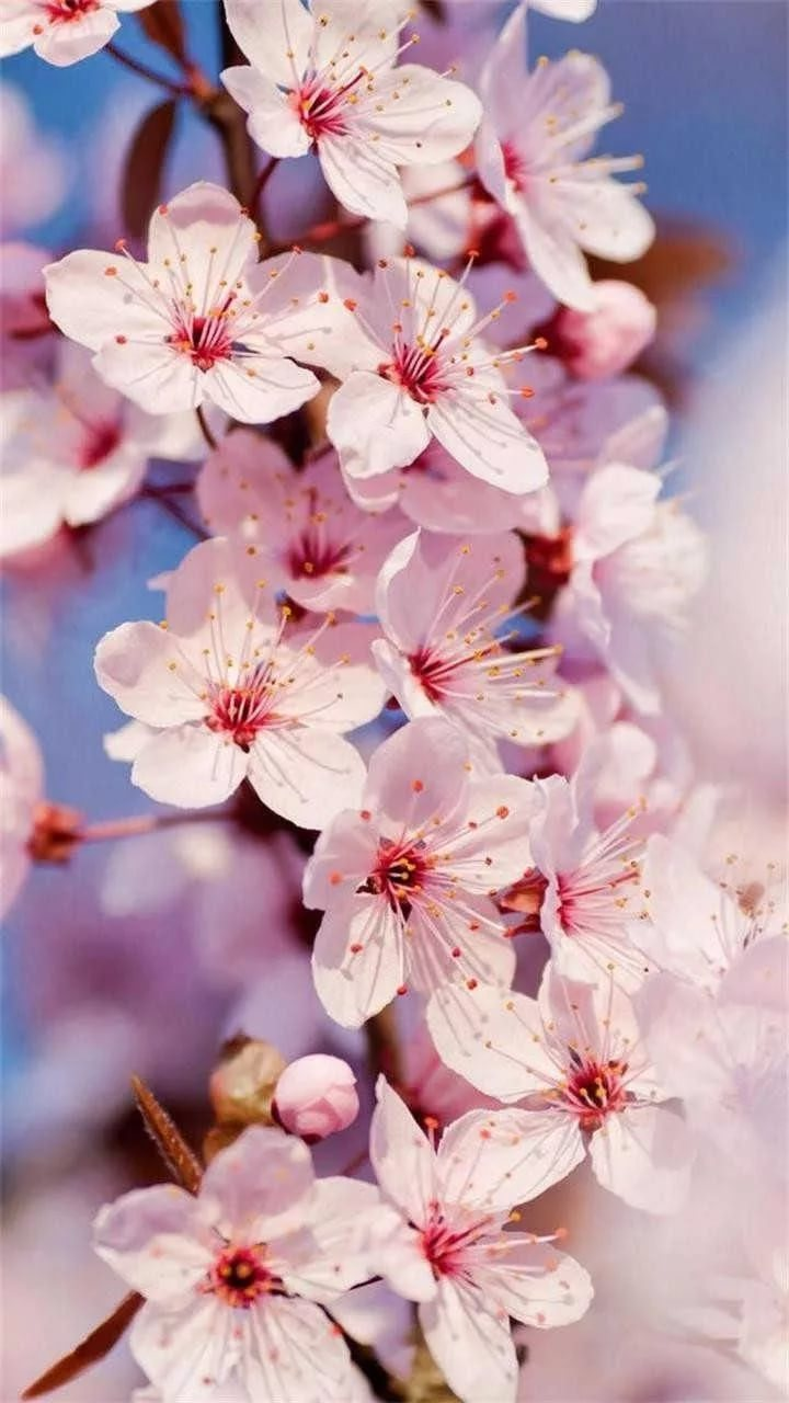 Красивые hd обои весна на телефон 16