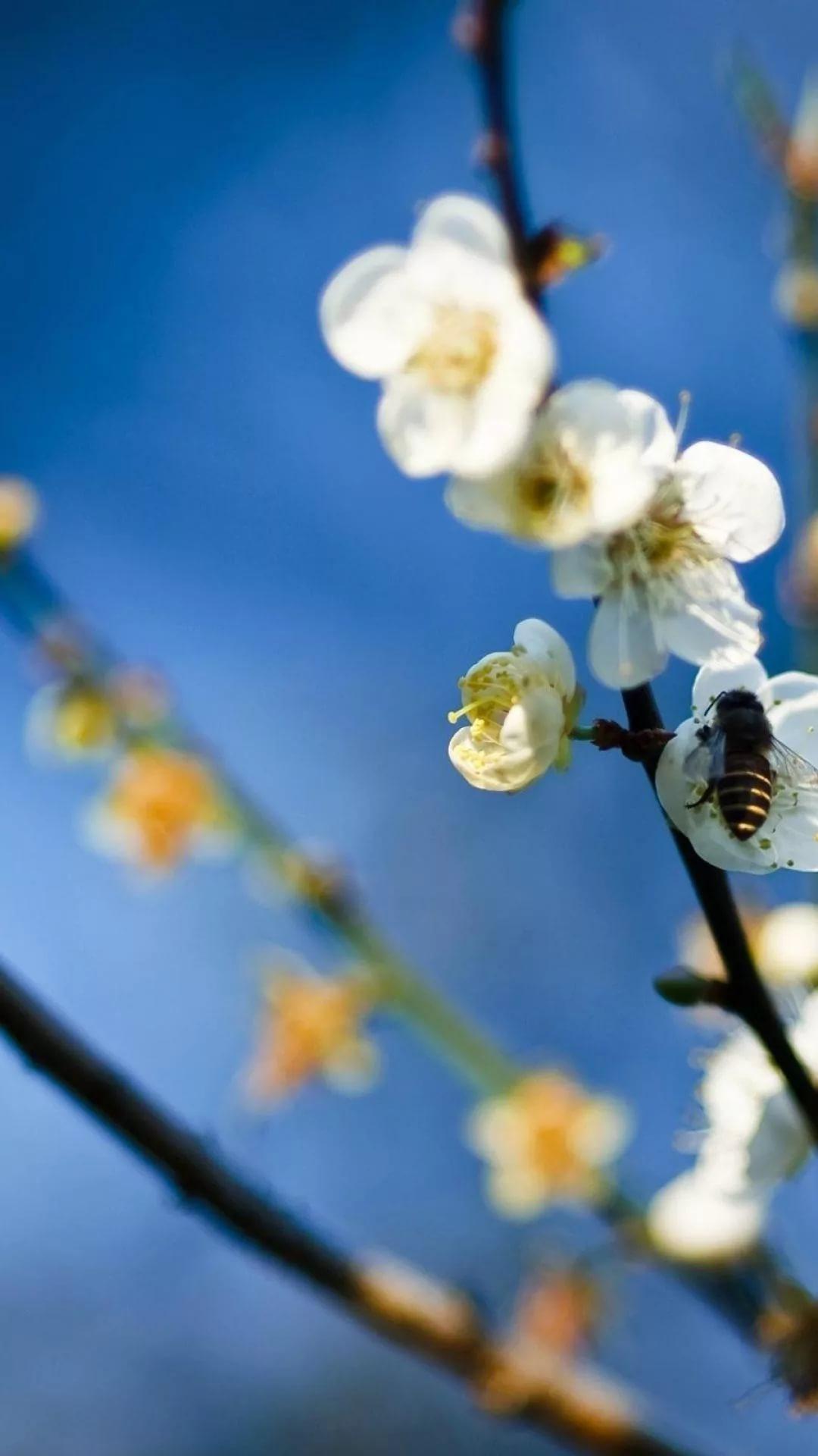 Красивые hd обои весна на телефон 17