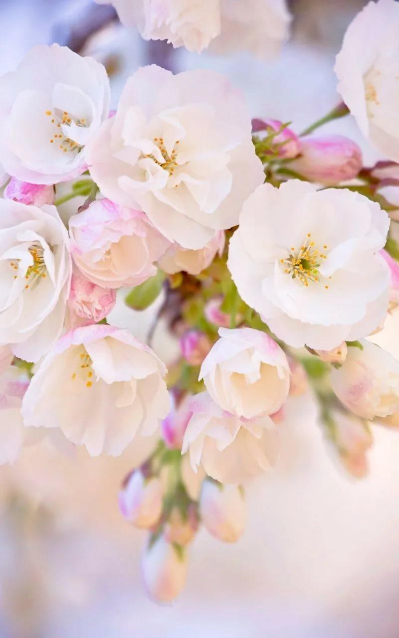 Красивые hd обои весна на телефон 18