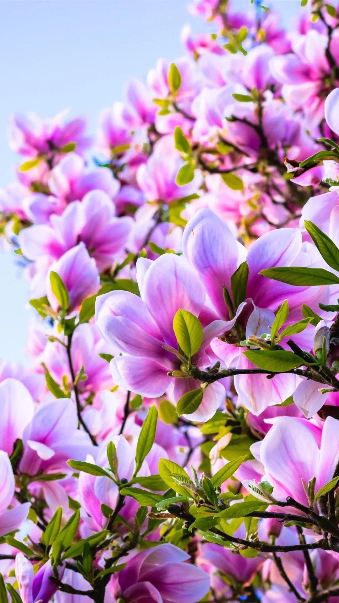 Красивые hd обои весна на телефон 2