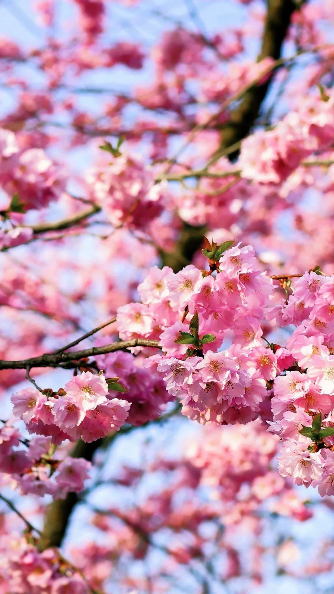 Красивые hd обои весна на телефон 3