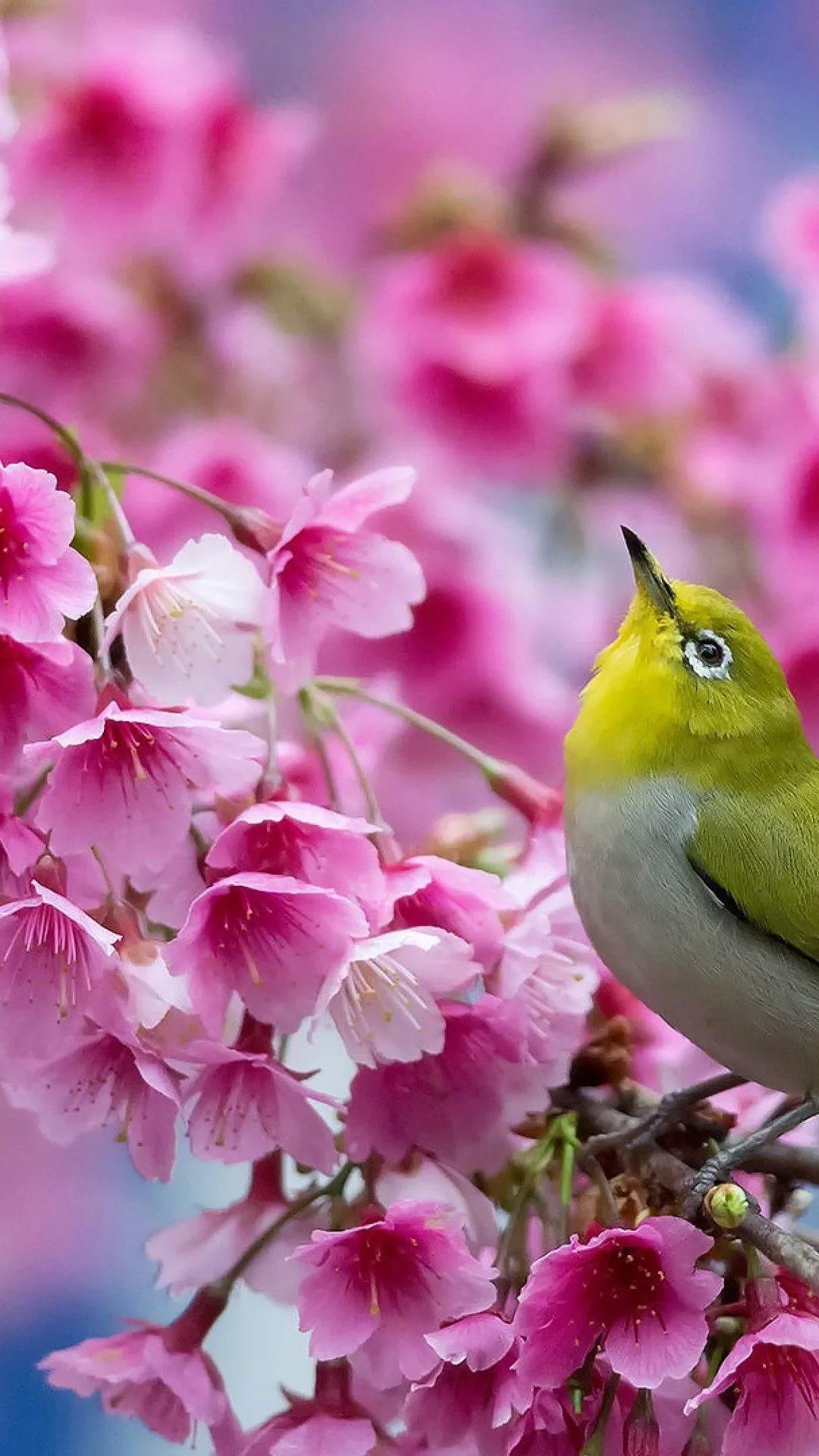 Красивые hd обои весна на телефон 4