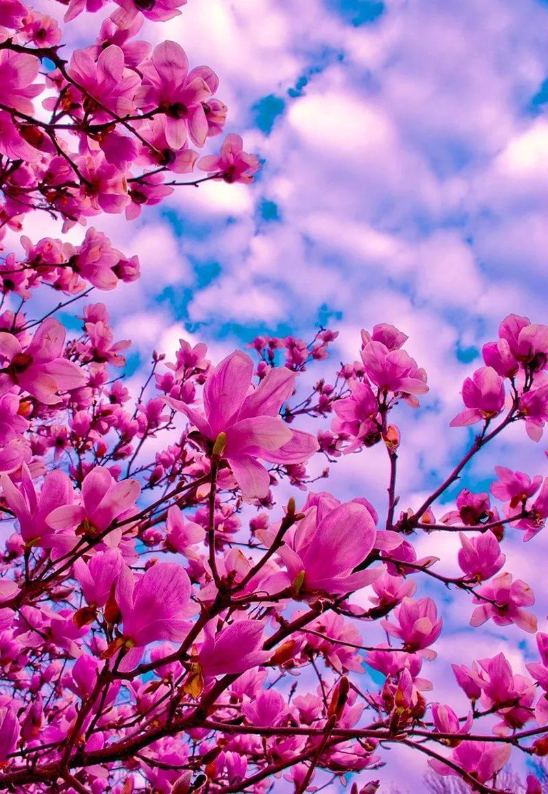 Красивые hd обои весна на телефон 5