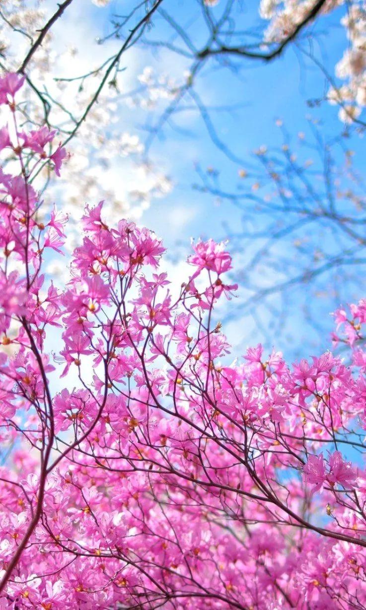 Красивые hd обои весна на телефон 6