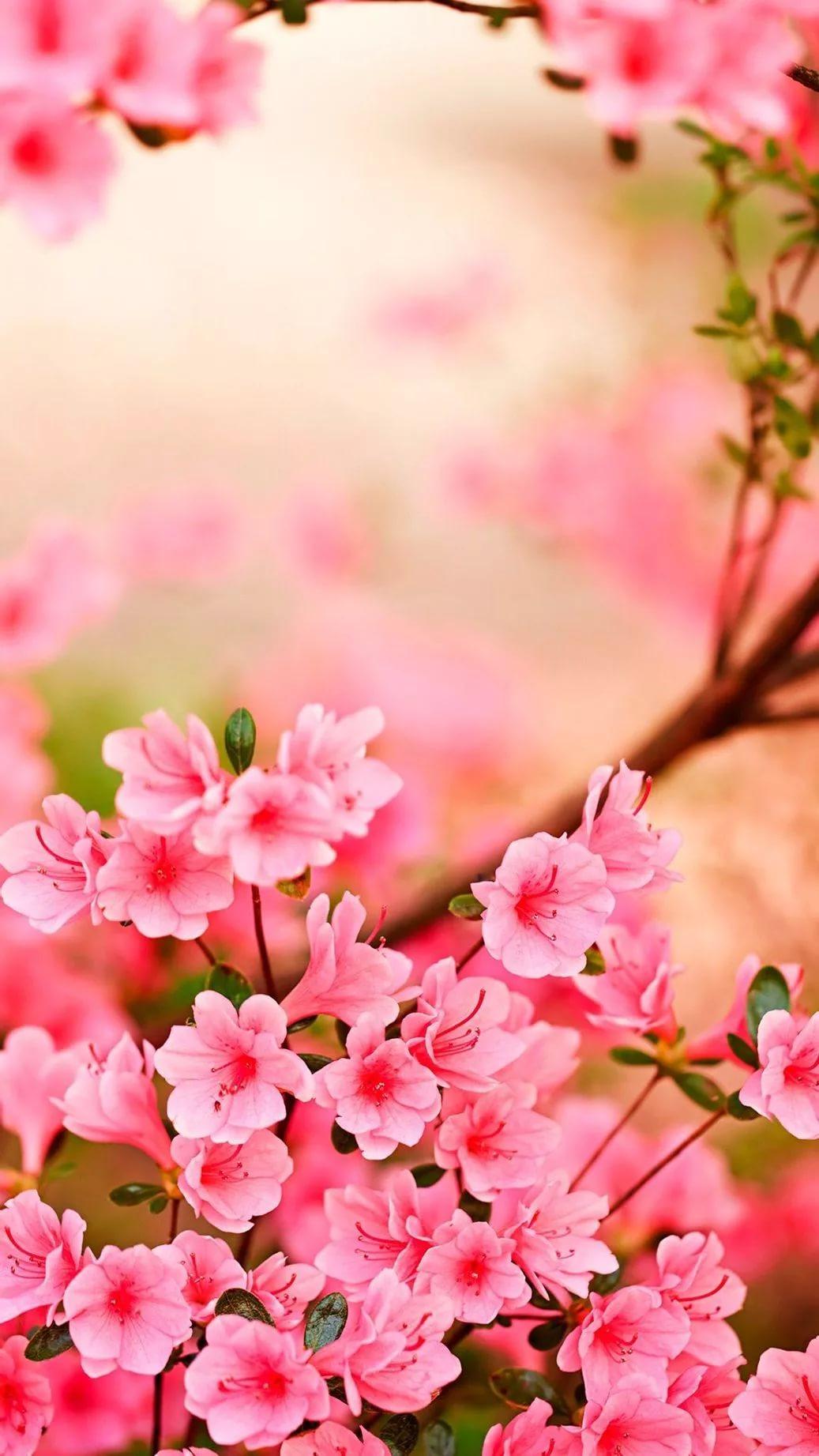 Красивые hd обои весна на телефон 8