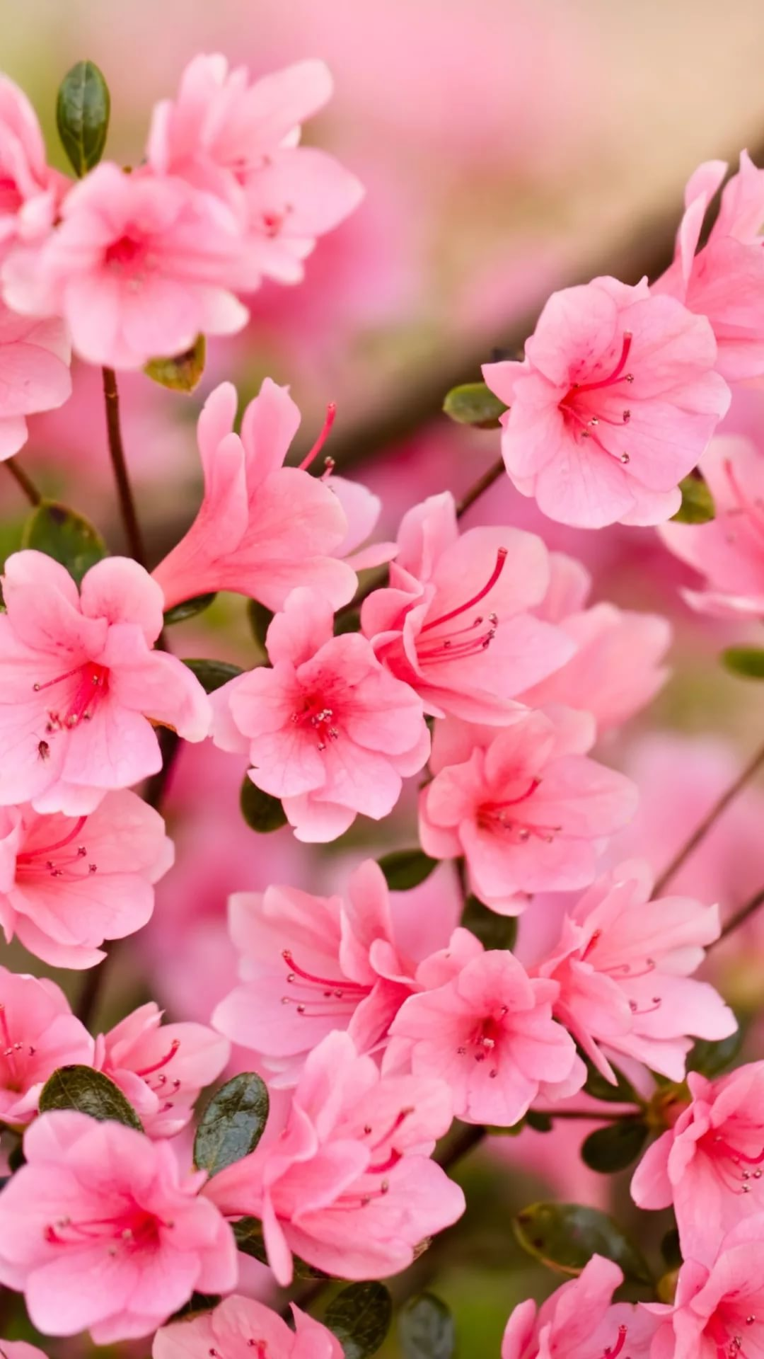 Красивые hd обои весна на телефон 9