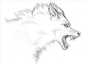 Красивый волк рисунок карандашом для срисовки 25