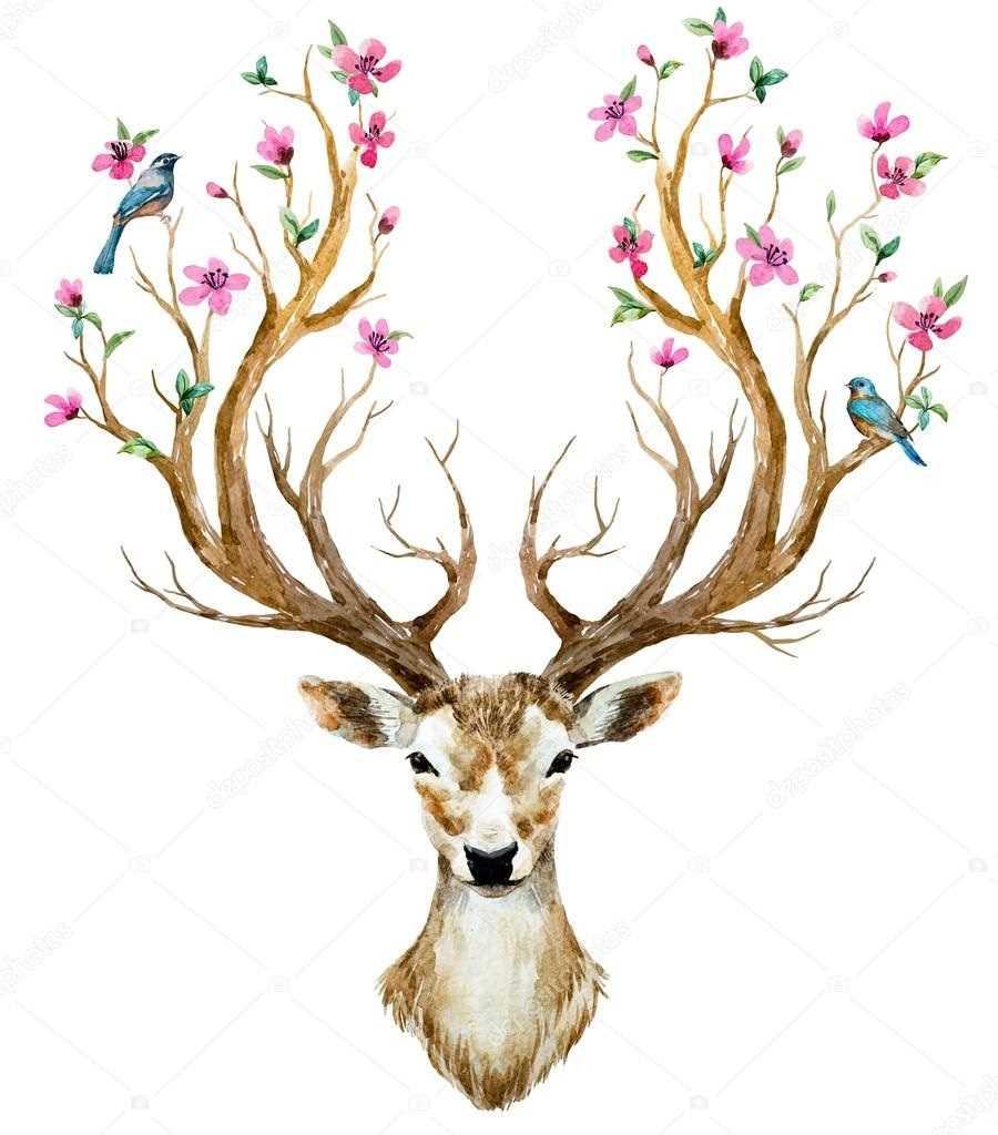 Красивый рисунок оленя, фото и картинки 01