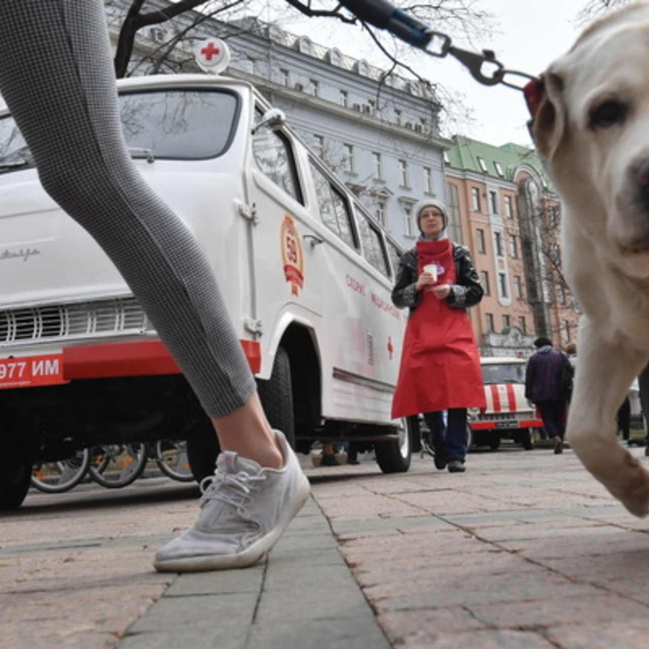 Прикольные картинки собак на прогулке 03