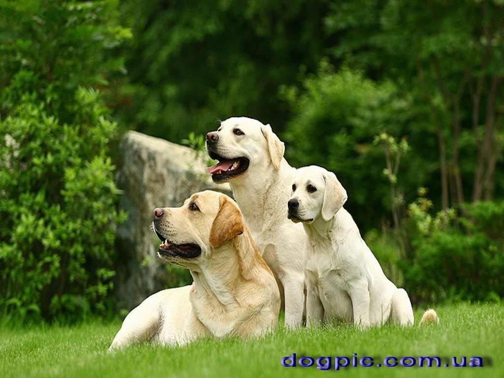 Прикольные картинки собак на прогулке 04