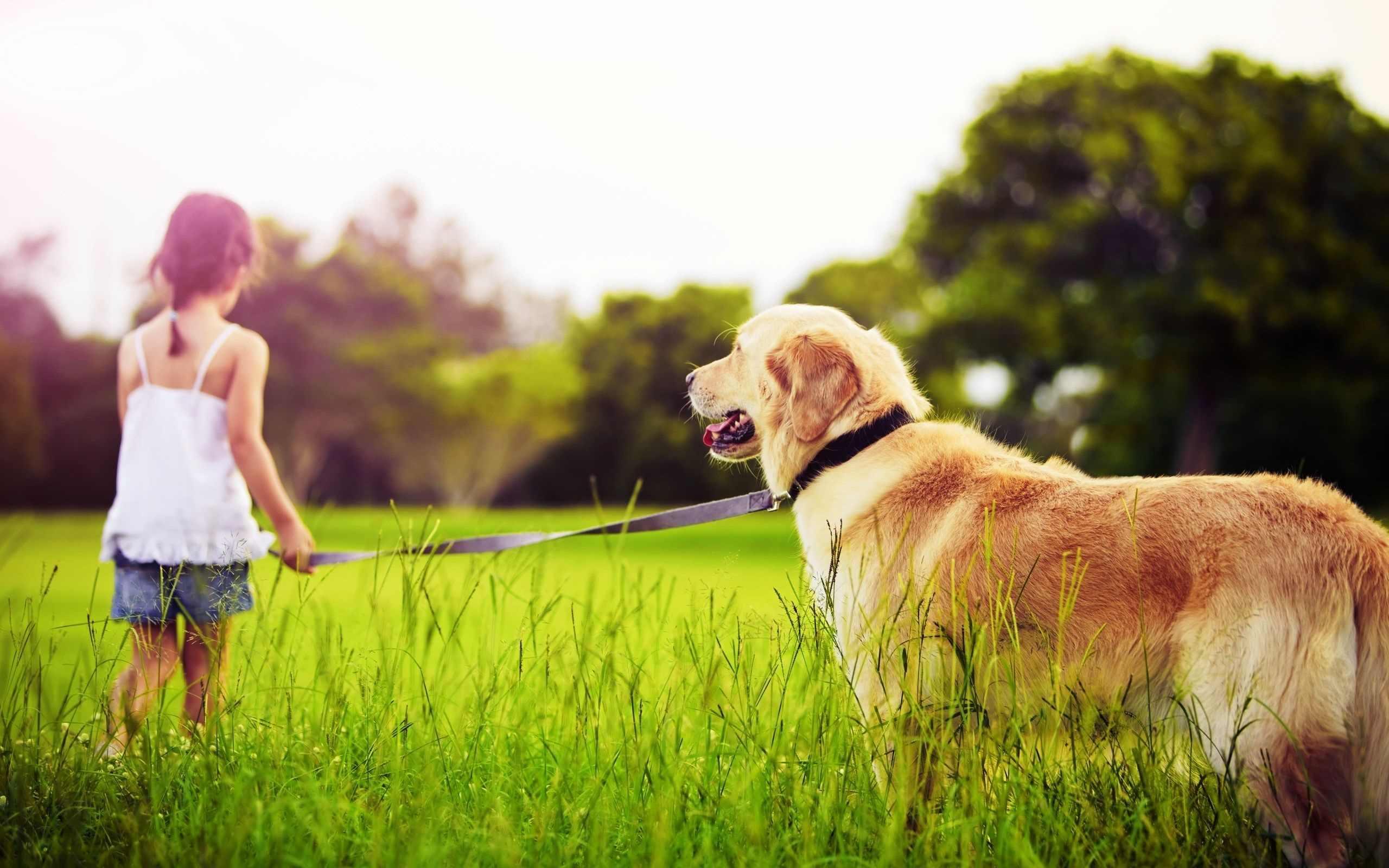 Прикольные картинки собак на прогулке 08
