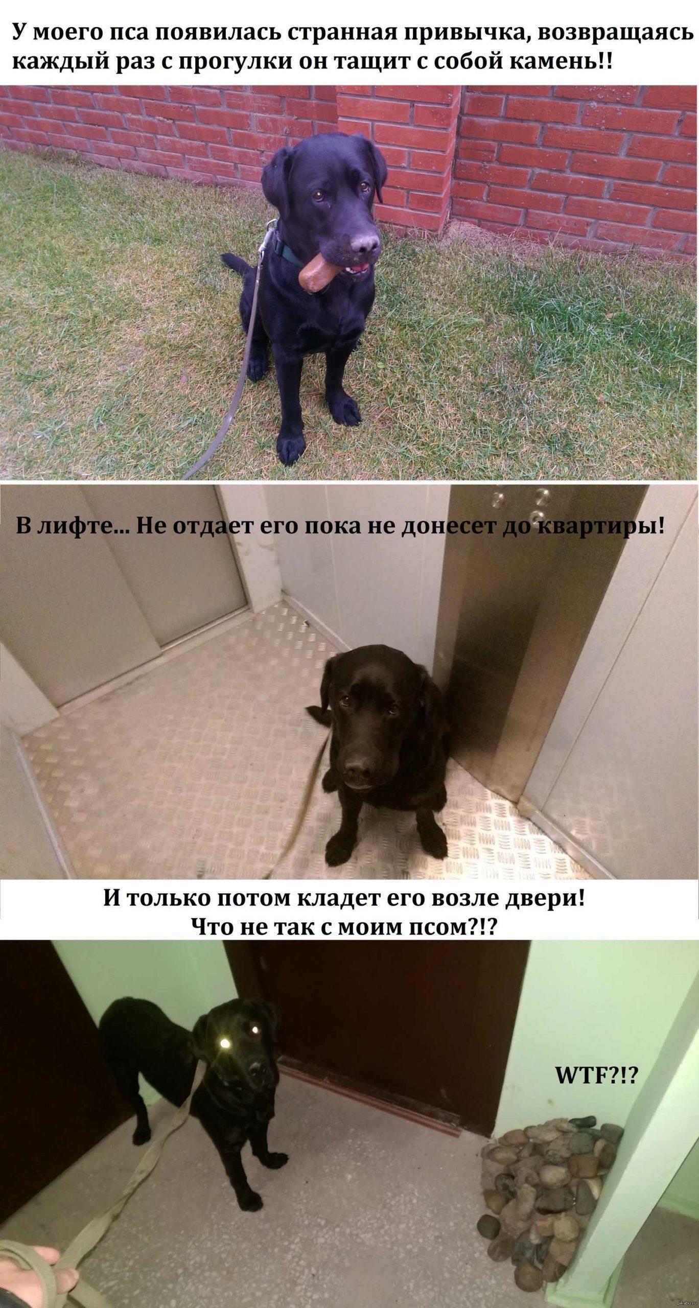 Прикольные картинки собак на прогулке 09