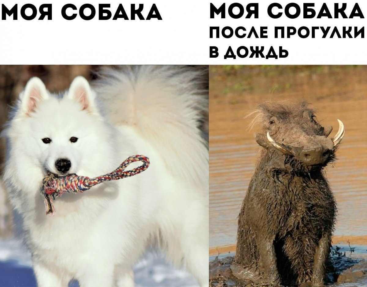 Прикольные картинки собак на прогулке 10