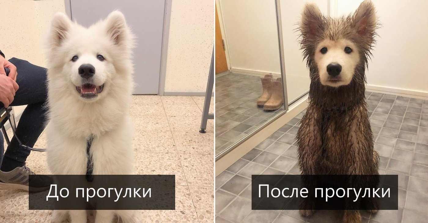 Прикольные картинки собак на прогулке 11