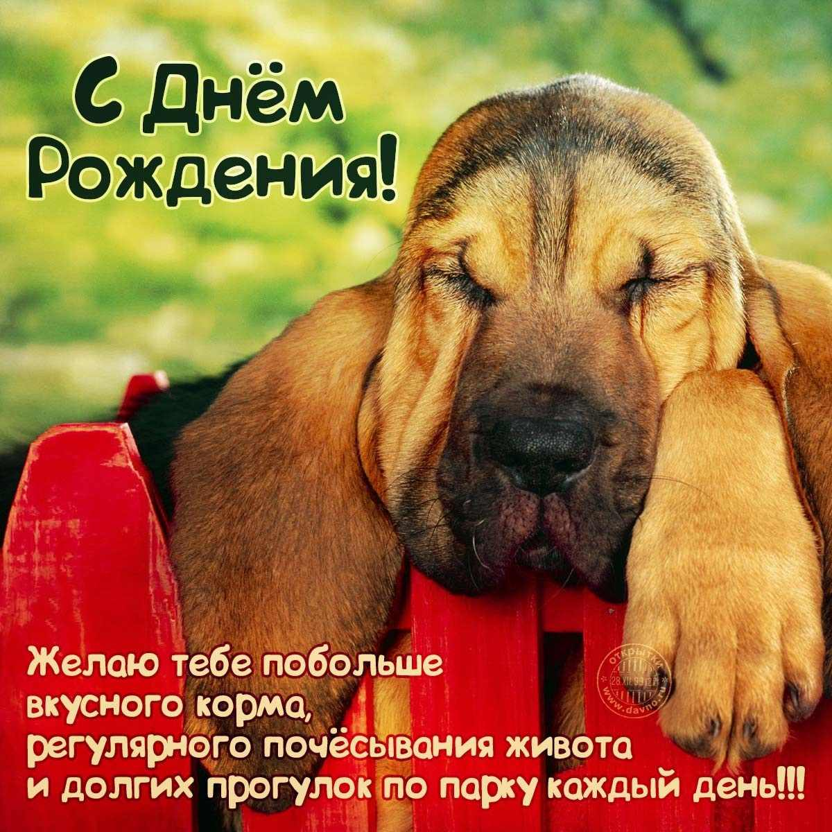 Прикольные картинки собак на прогулке 14